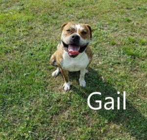 gail1-720x686