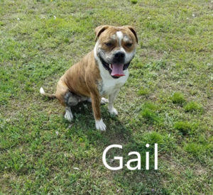 Bully to You's Gail