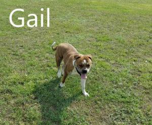 gail3-710x588